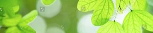 Service Environnement Asap